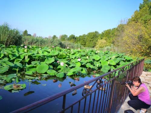 mougins, lac fontmerle, lotus,