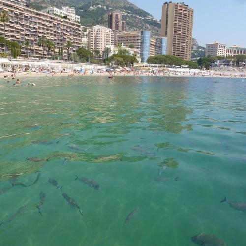 Monaco 15.7.jpg