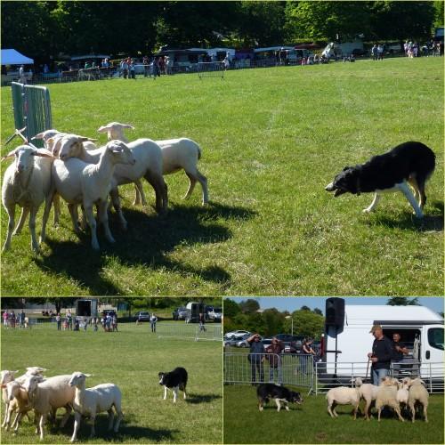 Cabris, fête des bergers