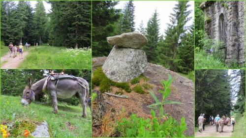 les granges de la brasques,les ânes de la brasque,la tour sur tinée,utelle