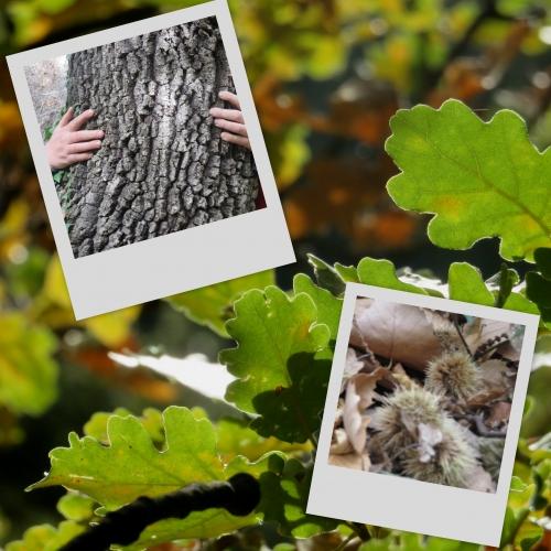 Berre-Les-Alpes, chataigniers, chênes, balades d'automne