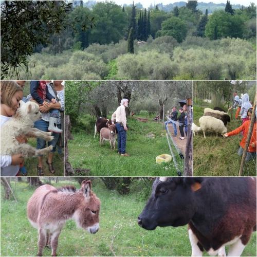 de ferme en ferme 2016,st jeannet,vignobles rasse,la clémandine,pierre boijout,agriculture bio,domaine des hautes collines de la côte d'azur