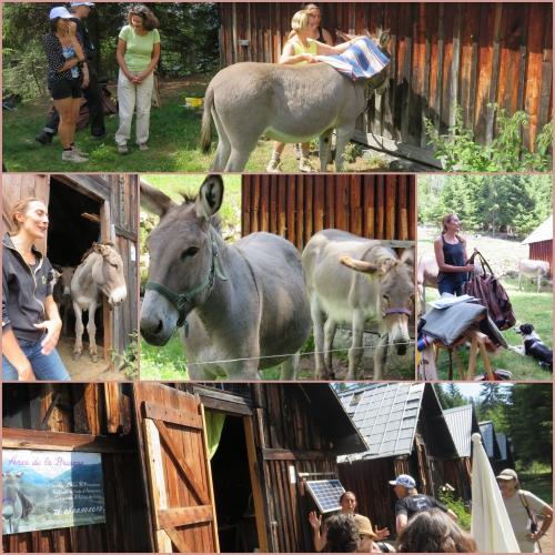 Les granges de la Brasque, Les ânes de la Brasque,