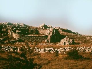 Saint Barnabé, Col de Vence, Lycose de Narbonne